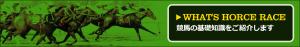 中央競馬投資会WINNERS(中央競馬投資会ウイナーズ)-無料コンテンツ-競馬の基礎知識を紹介